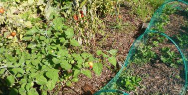 Jardinage écologique : certaines bonnes pratiques ne le sont pas toujours